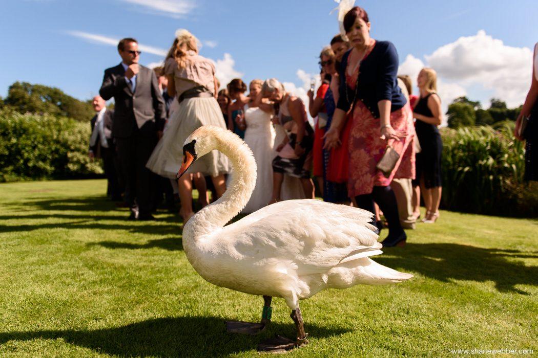 Summer weddings at Sandhole Oak Barn Congleton