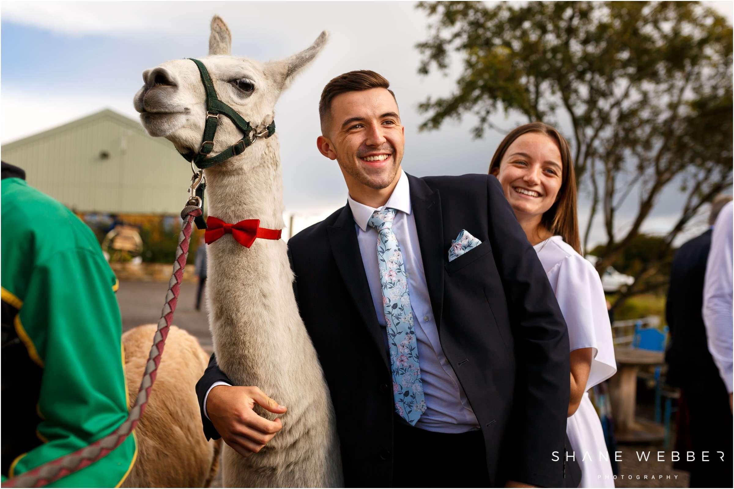 llama wearing bowtie