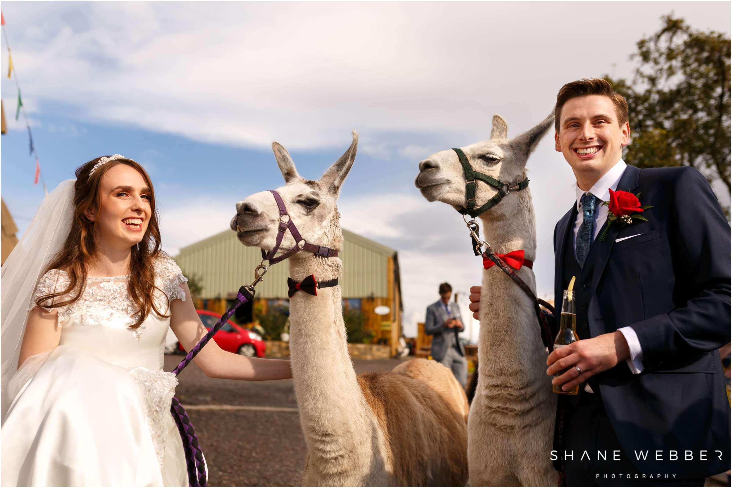 wellbeing farm llamas